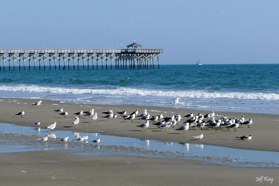 Beach Birds | Photo By : Jeff King tcgphoto.biz